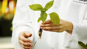 BASF invirtió 507 millones de euros en protección de cultivos