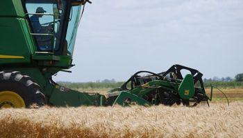 Pobre calidad del trigo pan cosechado en la campaña 2015/16