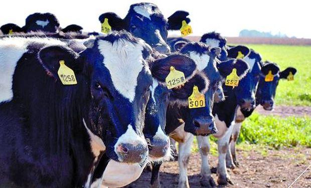 Fonterra: Nueva baja en precio de lácteos