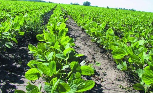El USDA podría mejorar la condición de la soja el lunes.