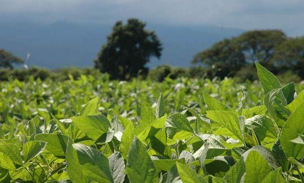 La devaluación de China y la estabilidad en la condición de los cultivos presiona las cotizaciones de soja.