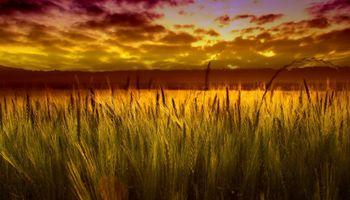Bajo margen del trigo compromete los resultados de la campaña