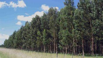 Déficit de casi 4800 millones de dólares para el sector forestal