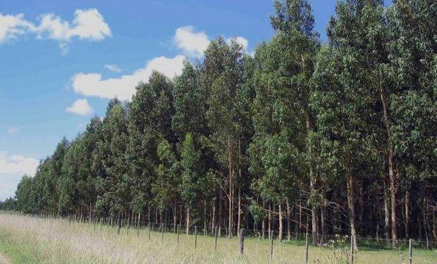 """Las empresas que integran la Asociación Forestal Argentina (Afoa) elaboraron una """"Propuesta de políticas públicas para el quinquenio 2015/2010""""."""