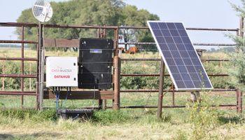 Con conocimientos técnicos de Australia, el INTA desarrolló una balanza inteligente para vacas