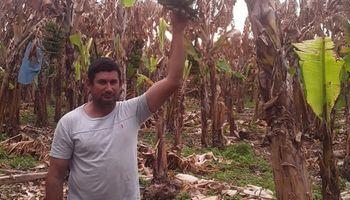 Producir en Formosa: tenía 3000 cajas de bananas para cosechar y la helada le dejó solo 500