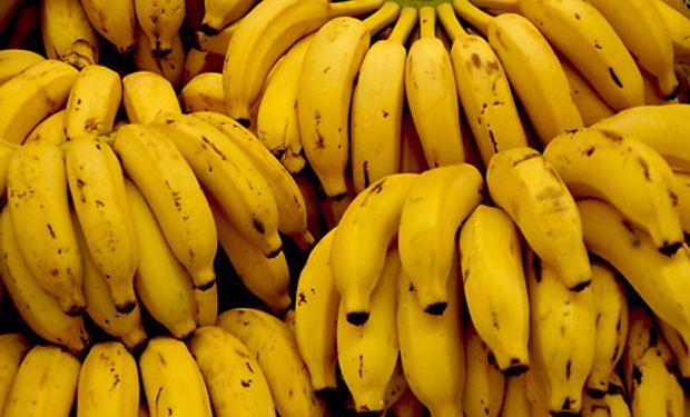 El ciclo bananero comienza en agosto-septiembre. Arranca con la fertilización, la floración en enero-febrero-marzo y abril y la cosecha de abril a agosto..