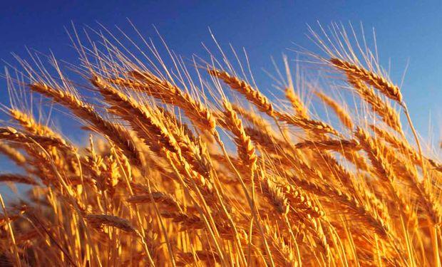 El Banco Nación lanza financiamiento en pesos con tasa fija del 29% anual para trigo, cebada y legumbres: cómo acceder