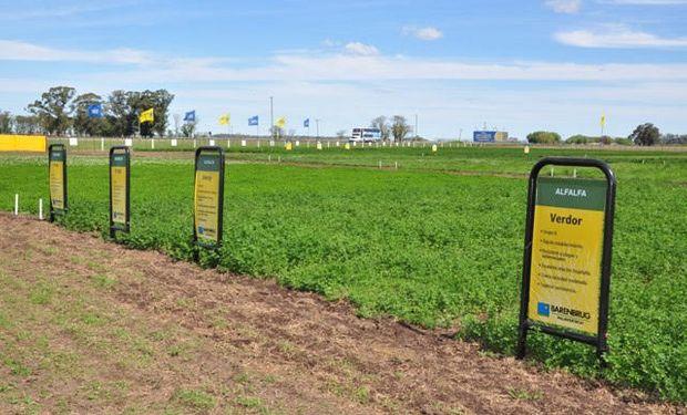 la reconocida empresa multinacional Barenbrug Palaversich tomó la decisión de volver al ruedo dirá presente del 8 al 11 de junio en la 22° edición de AgroActiva.