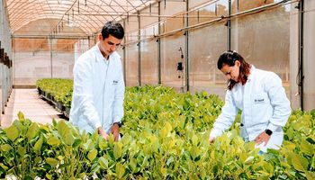 Innovación: empresa de insumos busca aumentar un 7% su oferta de soluciones sustentables