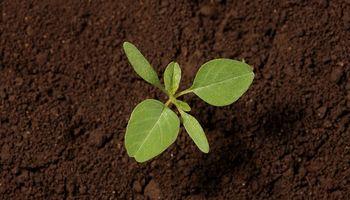 Las malezas no frenan ante la falta de lluvias y más que nunca compiten con la soja, el maíz y el maní por el recurso agua