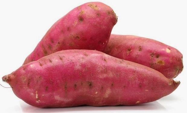 Los autores de la publicación consideran que ese ADN de origen bacteriano ayudó en el proceso de domesticación de la batata.