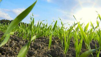 Bayer apoya a los agricultores con una amplia gama de soluciones agronómicas integradas