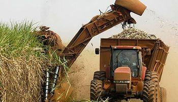 Independencia energética: la utilización de biomasa para reemplazar al gas
