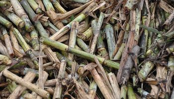 Biocombustibles: el objetivo del Gobierno es elaborar una nueva Ley y no prorrogar la actual