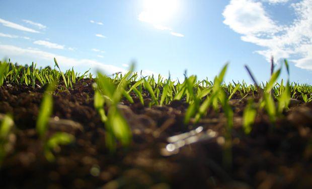 La bioeconomía se emparenta con la economía verde y, también, con la economía circular