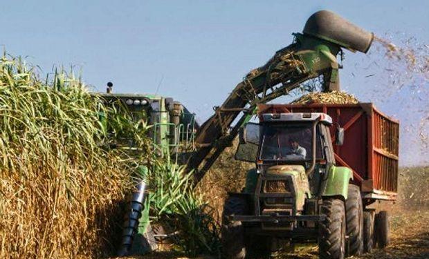 El bioetanol es producido a partir de maíz o de caña de azúcar.