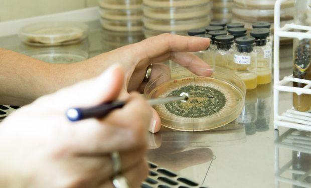 Los bioinsumos se imponen en el mercado y logran una facturación de 77 millones de dólares