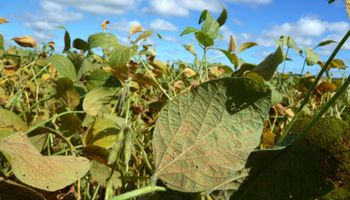 Productos combinados para soja: avanza la tecnología de biocontrol basada en enzimas con insecticidas
