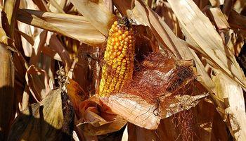 Energía a partir de la biomasa agrícola