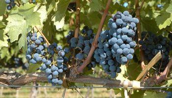El impuesto al vino quedará fuera de la reforma tributaria