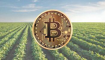 Vacas, azúcar y soja: ejemplos de inversión en el agro a través de criptomonedas