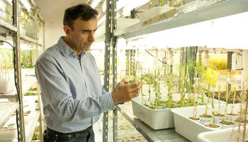 En verano, los cultivos resisten mejor un hongo patógeno