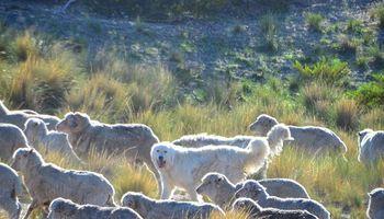 De la Patagonia a París: una colección de moda con lana sustentable