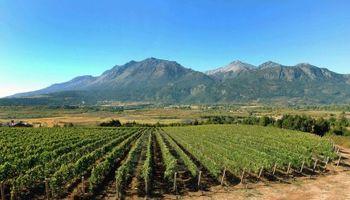 Crece tensión en sector vitivinícola