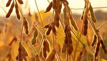 Bolsatech ya analizó 40 millones de toneladas de soja
