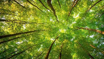 Sorpresa climática: para la NASA, el mundo es 'más verde' que hace 20 años