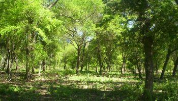Córdoba reabrió el debate por la protección del bosque nativo