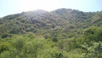 Córdoba reforestará 150.000 hectáreas de bosques para prevenir inundaciones