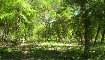 Proponen reforestar con especies nativas los suelos afectados por inundaciones y sequías