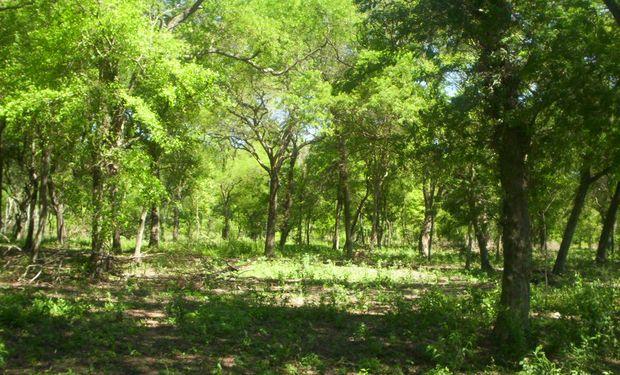 Bosque nativo en Argentina. Foto: INTA