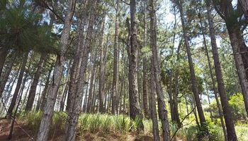El subsidio para bosques implantados  aumentó más de un 400 por ciento