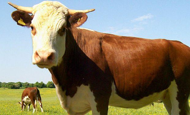 EE.UU. da el primer paso para volver a comprar carne local