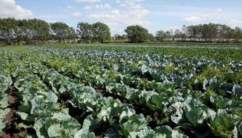 Establecen la obligatoriedad de las buenas prácticas agrícolas para la producción de hortalizas