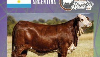 """El """"Miss World"""" de Braford fue para una cabaña argentina: """"Ganas sobran, la ganadería es pasión y gran esfuerzo"""""""