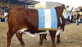 Braford brilló con los primeros grandes campeones de la Rural