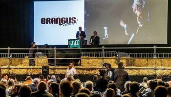 Un toro de la raza Brangus se vendió en un precio récord de $2,45 millones en la Rural