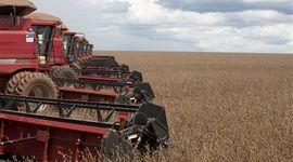 Las recientes lluvias y las bajas de Chicago impactan sobre el mercado de Rosario: cuánto se pagó por soja, trigo y maíz