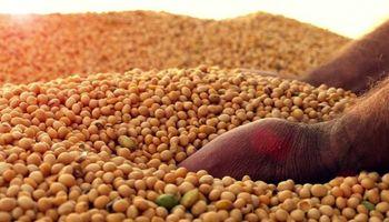 Calidad y brechas de rendimiento en soja: claves para explotar el potencial
