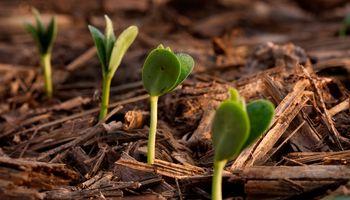 Fertilizantes y maquinaria: los brotes verdes en la agricultura