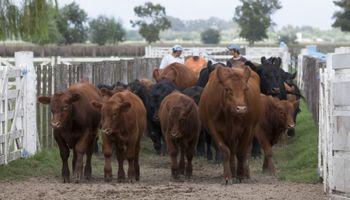"""Brucelosis bovina: señalarán como no apto para exportación a los bovinos de establecimientos """"sin estatus sanitario"""""""