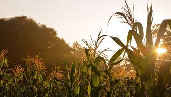 Buenas condiciones para los cultivos en Estados Unidos