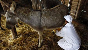 Producen leche de burra y aseguran que es una solución para los alérgicos a la proteína de la leche de vaca