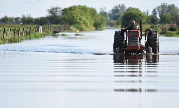 """""""El exceso sostenido de precipitaciones ha sido fundamental para la manifestación de este fenómeno que tanto perjuicio le causa a nuestro país"""", sostiene el ingeniero agrónomo."""