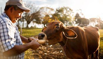 Bayer lanza subsidio global para el bienestar del ganado