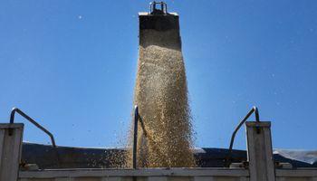 Informe preliminar: mejoró la calidad de la soja cosechada durante la última campaña